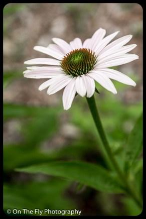 2015-07-21-0571-Flowers