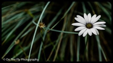 2015-07-21-0576-Flowers