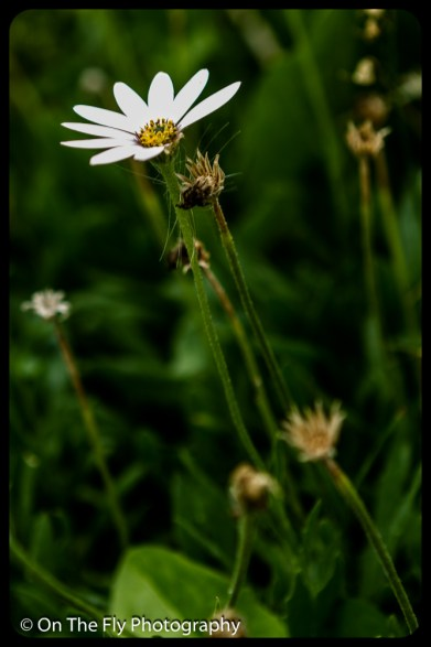 2015-07-21-0577-Flowers