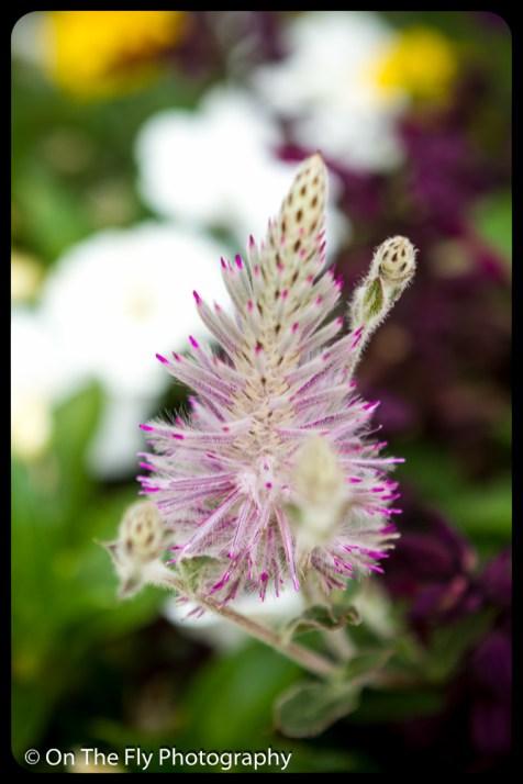 2015-07-21-0590-Flowers