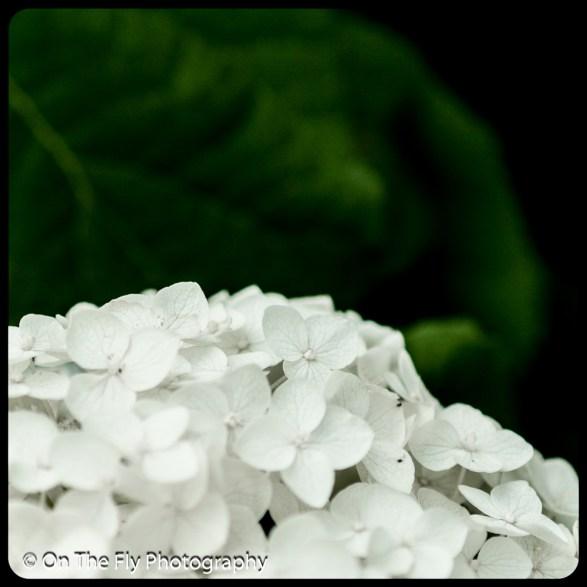 2015-07-21-0596-Flowers