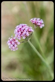 2015-07-21-0597-Flowers