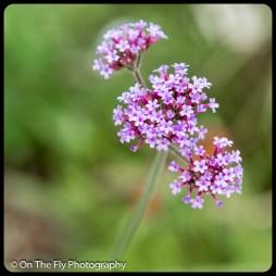 2015-07-21-0598-Flowers