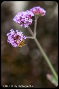 2015-07-21-0599-Flowers