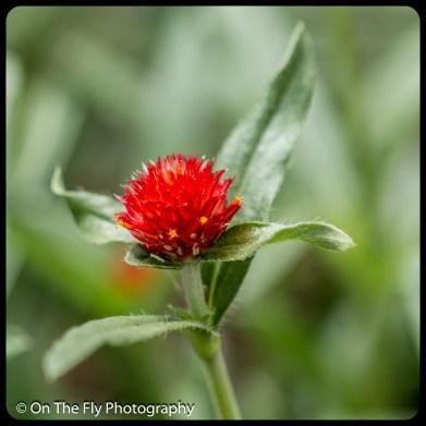 2015-07-21-0602-Flowers