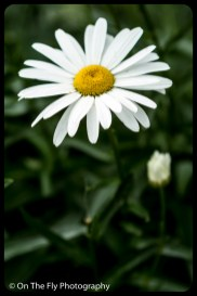 2015-07-21-0606-Flowers
