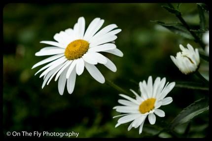 2015-07-21-0607-Flowers