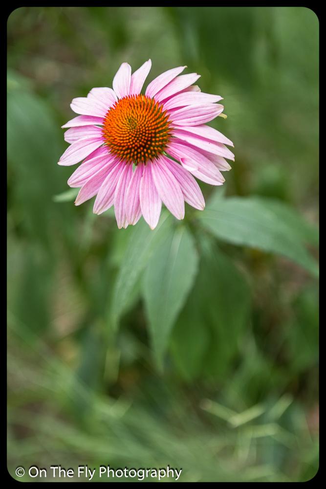 2015-08-02-0032-Flowers