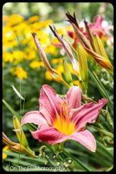 2015-08-02-0056-Flowers