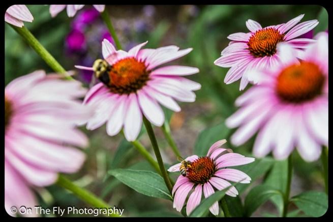 2015-08-02-0065-Flowers