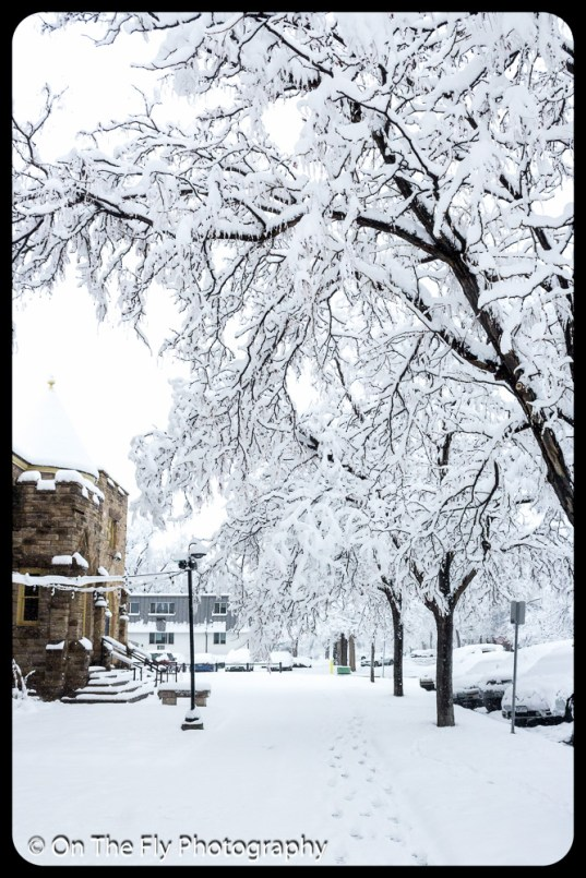 LD-Gerald-Snow-0012-2020-04-16