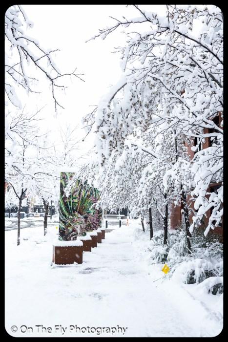 LD-Gerald-Snow-0020-2020-04-16