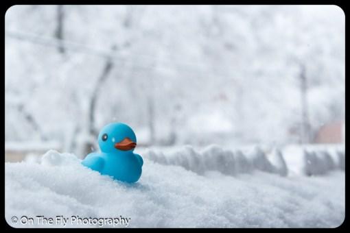 LD-Gerald-Snow-0025-2020-04-16