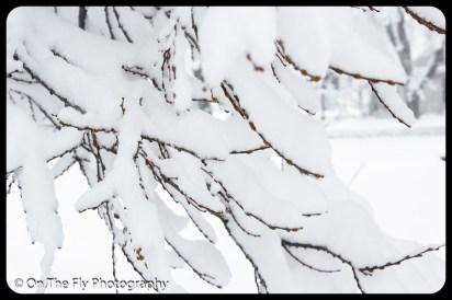 LD-Gerald-Snow-0042-2020-04-16