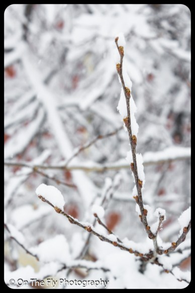 LD-Gerald-Snow-0045-2020-04-16