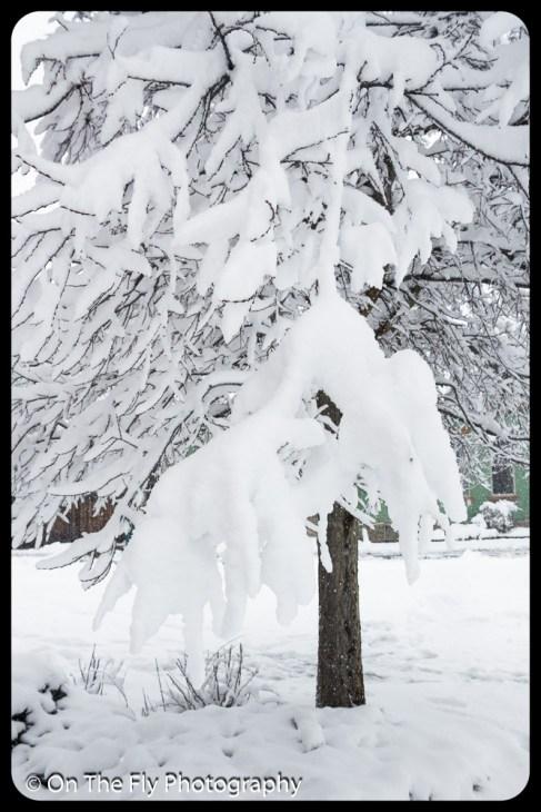 LD-Gerald-Snow-0047-2020-04-16