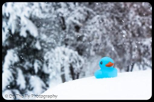 LD-Gerald-Snow-0048-2020-04-16