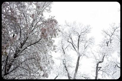 LD-Gerald-Snow-0050-2020-04-16