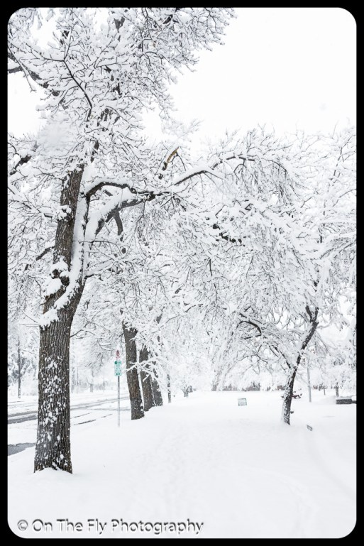 LD-Gerald-Snow-0057-2020-04-16