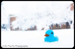 LD-Gerald-Snow-0058-2020-04-16