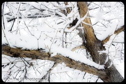 LD-Gerald-Snow-0064-2020-04-16