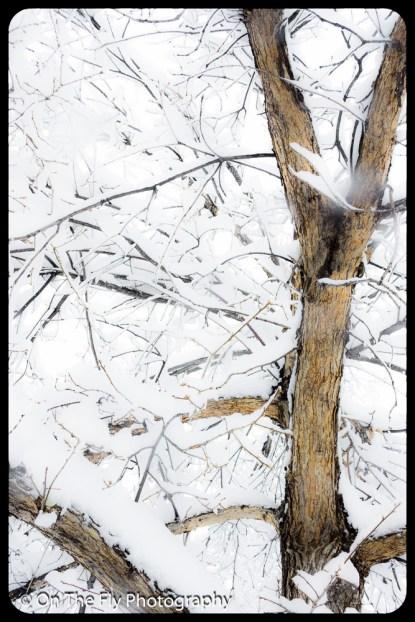 LD-Gerald-Snow-0065-2020-04-16