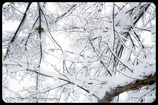 LD-Gerald-Snow-0066-2020-04-16