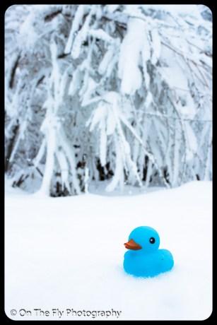 LD-Gerald-Snow-0073-2020-04-16