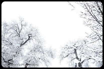 LD-Gerald-Snow-0099-2020-04-16