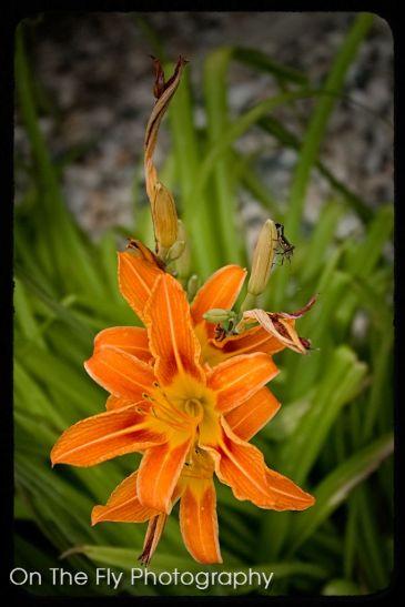 Flowers0005-2020-07-15