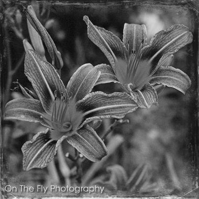 Flowers0006-2020-07-15