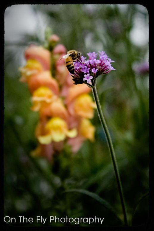 Flowers0014-2020-07-15
