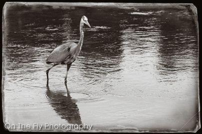Fossil-Creek-Park-0035-2020-06-21