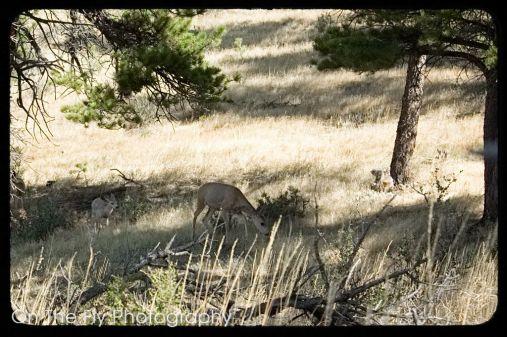 Horsetooth-Mountain-0027-2020-09-03
