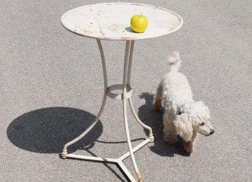 Petite Table Jardin Fer Couleur | Mobilier Jardin Fer Coin Leclerc ...