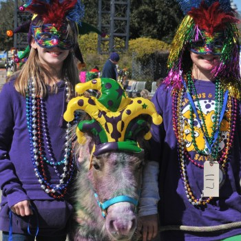A photo of a pony dressed up to attend Mardi Gras in Shreveport