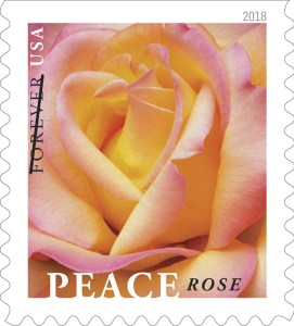 An image of the Peace rose stamp