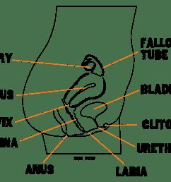 fallopian tubes [ 1920 x 1440 Pixel ]