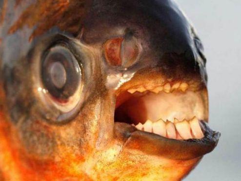 """小心了 这种鱼专吃男士的""""传家之宝"""""""