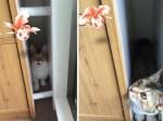 家里宠物居然能看得见Pokemon GO小精灵