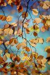 遇见秋天 静在心里