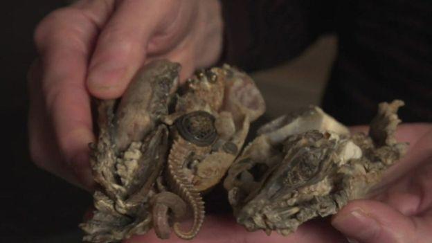 吉莉安•格恩瑟的雕塑作品使用的全部是天然材料