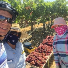 With two grape pickers or are they banditas?