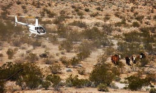 1-Bundy-Ranch-Fed-Cattle-Rustling