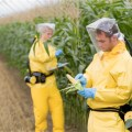 CORPORATE COLLUSION: Monsanto Had Academics Write Articles Supporting GMOs