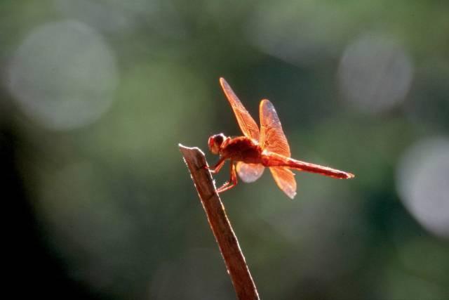 Oblíbili jste si digitální fotoaparát? A víte, že má hodně společného s jistým, dobře známým, hmyzem? Ano, týká se to vážky! Navíc to vůbec není jediný příklad toho, jak příroda, která dosud tají mnohé záhady, výrazně přispěla k vývoji lidské civilizace.