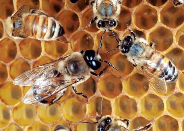 Světle žlutá nebo zlatavá, tmavohnědá anebo dokonce červená hmota, někdy více tekutina, jindy v pevném skupenství. Hmota, která je známá a oblíbená od pradávna a která se stala dokonce mýtem. Jde o hmotu všední, a přece zároveň vzácnou - o med.