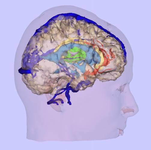 Betty Edwardsová, profesorka na oddělení umění Kalifornské státní univerzity, aplikovala nedávno nejnovější objevy z oblasti výzkumu mozku na metodiku výuky kreslení a zjistila, že tak umožňuje lidem znovuobjevit své tvůrčí potenciály. Její kniha Kreslení pravou stranou mozku je snad nejcitovanější a nejpoužívanější instruktážní knihou kreslení na světě.