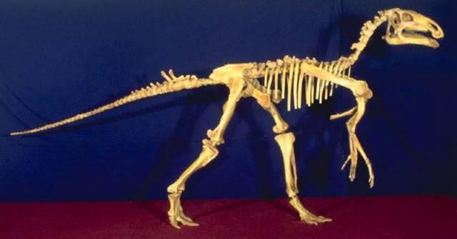 Před 94 miliony let, v období svrchní křídy, ležela většina našeho území pod hladinou mělkého moře. Odbornou veřejnost vzrušil nedávno objev pozůstatků suchozemského dinosaura v Čechách, který je prvním důkazem toho, že tehdejší souostroví u Kutné Hory obývali i tito pravěcí ještěři