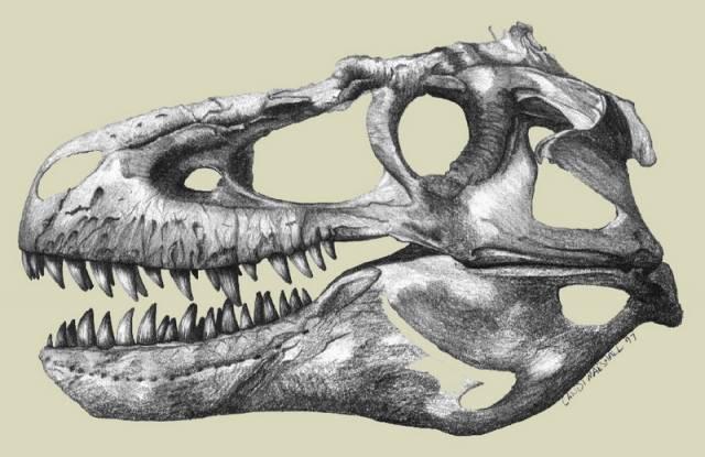 Mozkový nádor se podařilo identifikovat ve zkamenělé lebce masožravého ještěra Gorgosaura po pečlivém vyhodnocení v laboratoři.